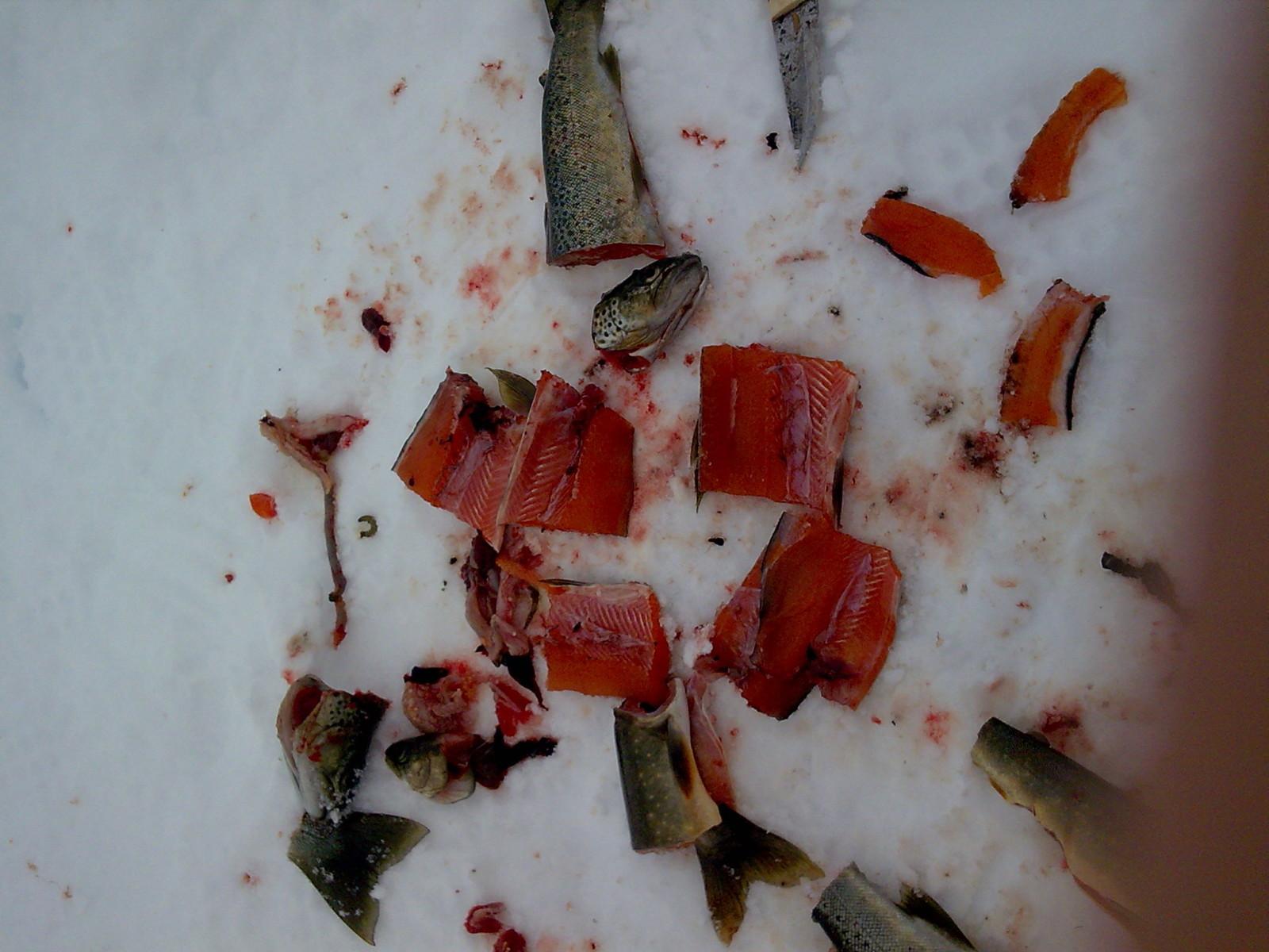 kvalitetsfisk-fra-finnmark.jpg